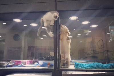 Kitten Escapes From Cage To Play With Puppy Friend