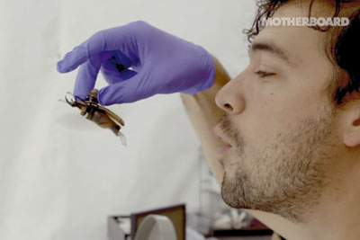 We Can Now Turn Bugs Into Remote-Controlled Cyborgs