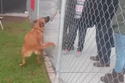 Heartbreaking Moment When Dog Left At Shelter Sees Her Family Come In To Adopt New Dog