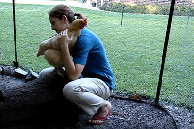 Do Chickens Deserve Love And Hugs Too? This Video Will Make You Think