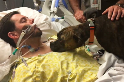 Dog Visits Hospital To Say Goodbye To Her Dying Owner For The Last Time