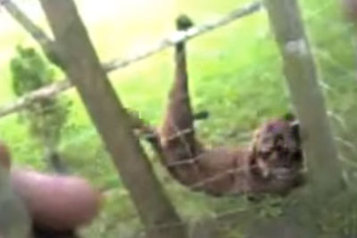 Dog Surprises Police Officer After Being Freed From A Fence