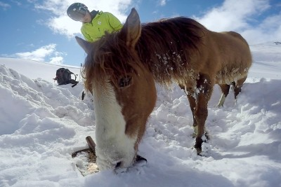 Snowboarders Rescue A Stranded Horse Trapped In 4 Feet Snow In Chile