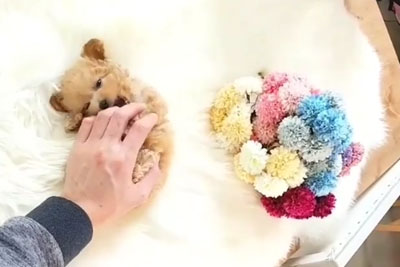 This Cute Puppy Will Steal Your Heart In Just Seconds