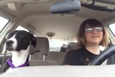 It's Just A Regular Car Ride For Her And Her Dog - Until This Song Comes On The Radio