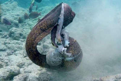 The Head-To-Head Sea Battle You've Been Waiting For With Eel And Octopus