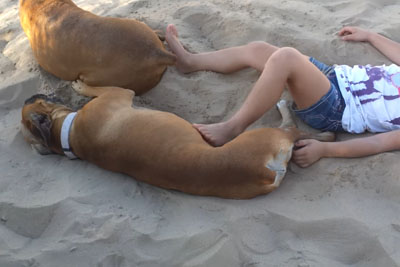 Girl Annoys A Chilling Dog At The Beach, Then She Gets Instant Karma