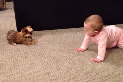 Dad Turns On The Camera, Records His Baby Having A Hysterical Conversation With Family Dog