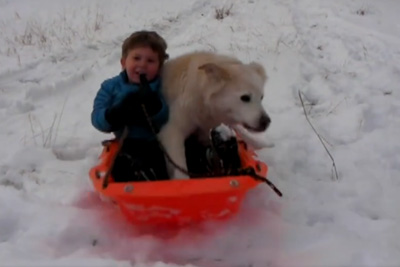Funny Dogs Playing In The Snow Compilation