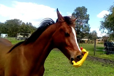 You Haven't Seen A Horse's True Colors Until You've Seen It Go Wild On A Squeaky Toy