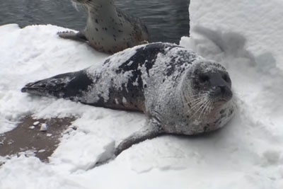 Animals At The Oregon Zoo Have The Time Of Their Lives After A Huge Snowstorm