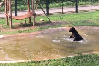 Bear Jumps For Joy After He Was Released From A Small Cage In Bile Farm