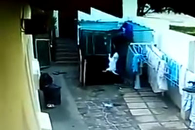 Burgler Jumps In A Courtyard Guarded By Bull Terriers, Dogs Deliver Instant Justice