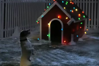 Touching Christmas Video About A Lonely Dog Will Hit You Right In The Feels