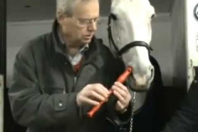 You Won't Believe It: This Horse Can Play Flute With A Little Help Of His Owner