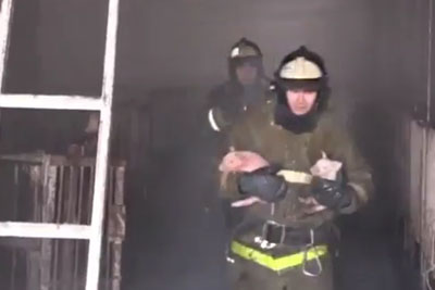 Watch Firefighters Rescue These Tiny Piglets From A Barn Fire In Russia