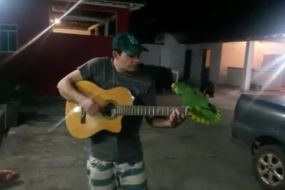 Parrot Sings With Its Owner While He's Playing His Guitar