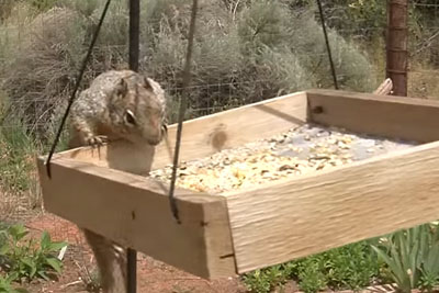 Clever Homeowners Stop A Birdseed-Stealing Squirrel In His Tracks