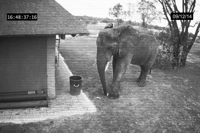 What This Elephant Does Will Blow Your Mind. If They Can Do It Why Can't We?