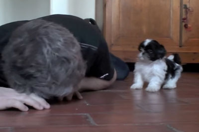Owner Sat On The Floor, Then This Shih Tzu Puppy Stole The Whole Show