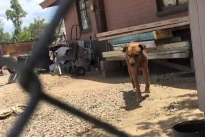 This Dog Was Chained His Whole Life. See His Touching Reaction When Man Rescues Him!