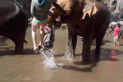 Elephant Gets Irritated At Girl Petting It, Trashes Her