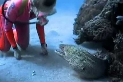Brave Diver Manages To Befriend A Vicious Moray Eel Over Years Of Contact