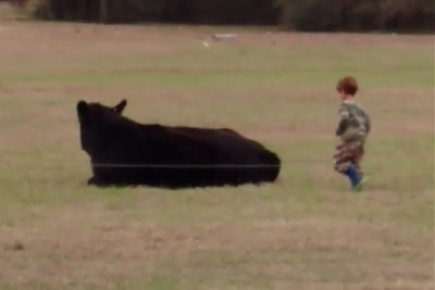 Unwise Dad Bets His Kid To Jump On A 1,300-Pound Cow