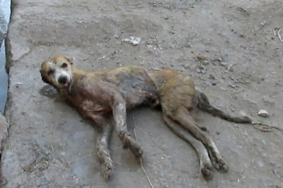 Hopeless Wounded Dog Dying On Side Of Street Gets Rescued