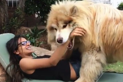 Everyone Is Falling In Love With This Big Dog