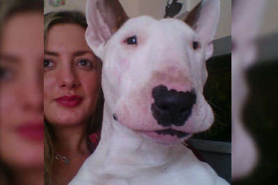 Adorable Bull Terrier Sings Ed Sheeran's Thinking Out Loud In Hilarious Way