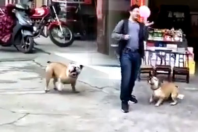 It's Really Hilarious When You Give This Dog A Balloon