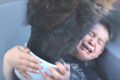 A Kid Hilariously Freaks Out After A Llama Pays A Visit To The Family Car