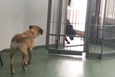 Dog Was Adopted 4 Years Ago. Now Watch As An Old Friend Walks Through The Door