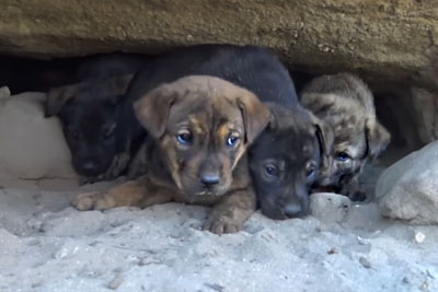 This Heartbreaking Puppy Rescue Is A Must See. Prepare Your Tissues!