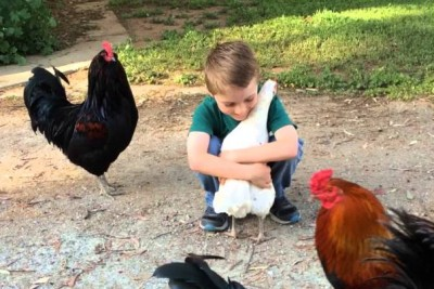 Little Boy And His Chicken Reunite After Haircut Inspection