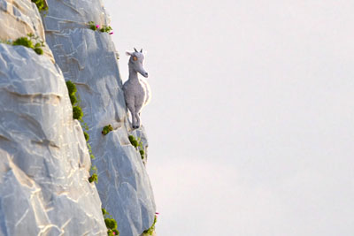 This Short About Goats Is Something You Really Must See