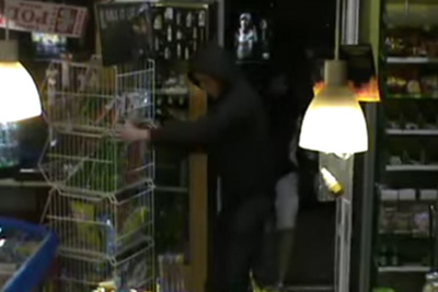 Polish Thieves Steal Crisps