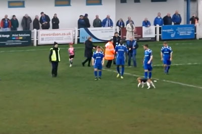 Excited Dog Hilariously Stops Play For Seven Minutes To Run Around The Pitch