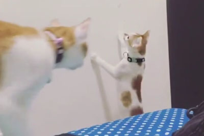 Kitten Couldn't Reach A Toy, Then Mama Cat Steps In To Save The Day