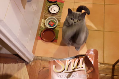 This Cat Wants To Eat Everything And She Begs For It In Cutest Way