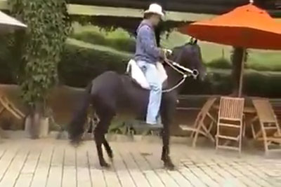 Cowboy Shows A Special Talent Of His Horse, You've Never Seen Something Like This