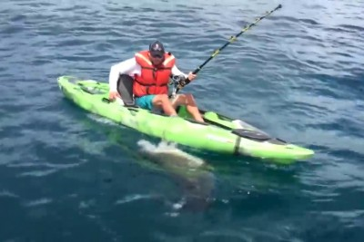 Fisher Hooks A 7-Foot Bull Shark, Which Responds By Flipping His Kayak