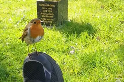 Mom Brought To Tears When Wild Bird Comforts Her While Visiting Son's Grave