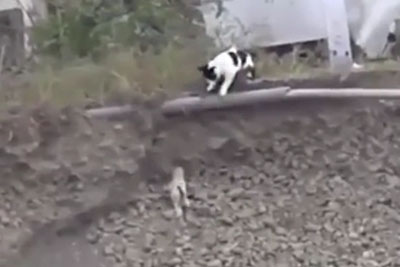 Little Puppy Is Stuck In Ditch And Can't Get Out. Then A Stray Cat Comes To His Rescue!