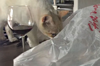 Cat Instantly Regrets Getting In The Bag, Owner Captures Madness On Camera