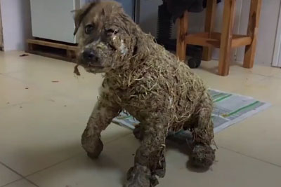 Kids Covered This Puppy In Glue, Then Threw Him In Mud. See How Dog Looks Like Today!
