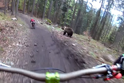 Downhill Rider Captures A Large Bear Chasing Another Rider On His GoPro Camera