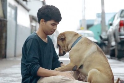 Pets Recive Hugs All The Time, But Stray Ones Do Not. This Video Will Make Your Day!