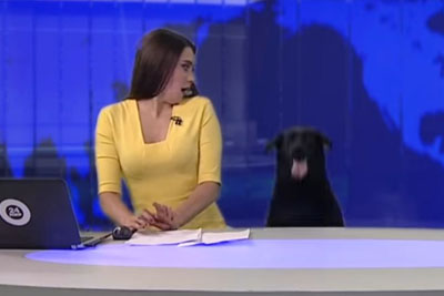 Dog's Surprise Appearance Is The Best Part Of This Newscast